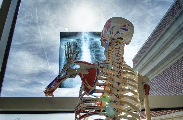 kości szkielet
